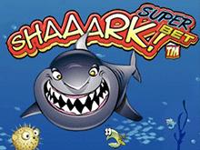 Акула Суперставка